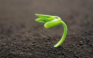 nature_other_sprout_nature_earth_life_hope_125691_detail_thumb